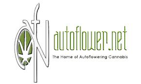 autoflower network