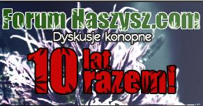 forum haszysz